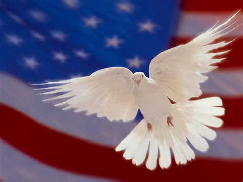 American Flag And White Dove Of Peace Hd Wallpapers For